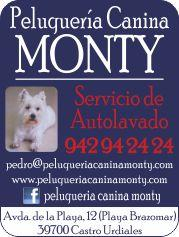 PELUQUERIA CANINA MONTY